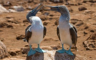 Backpacken Zuid Amerika - Galapagos eilanden - Ecuador