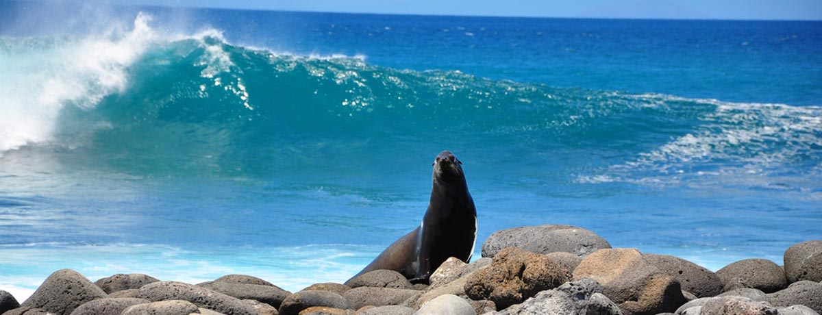 De Galapagos Eilanden horen bij Ecuador en zijn een droombestemming voor vele backpackers