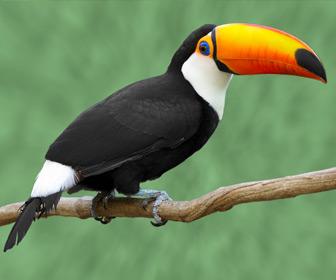 Suriname tropische vogels zie je tijdens het backpacken in Suriname