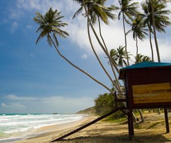 Venezuela strand met palmen