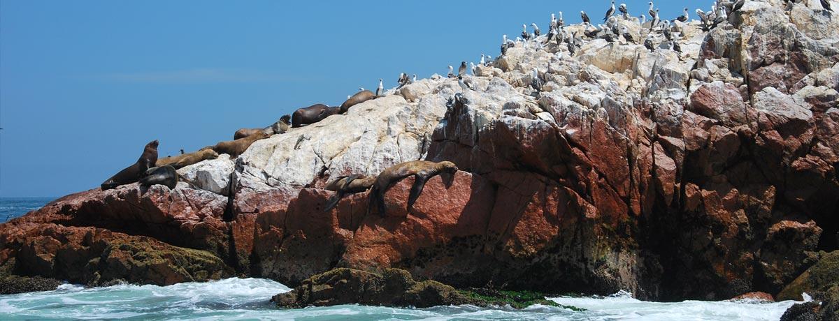 De Ballestas Eilanden nabij het vissersplaatsje Paracas