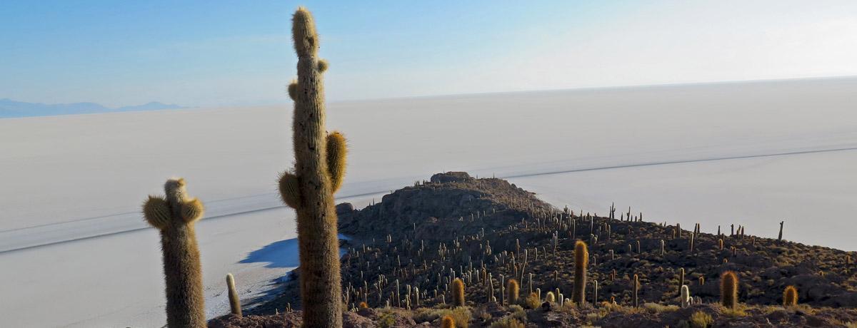 Cactuseiland op de salar de Uyuni zoutvlakte in Bolivia