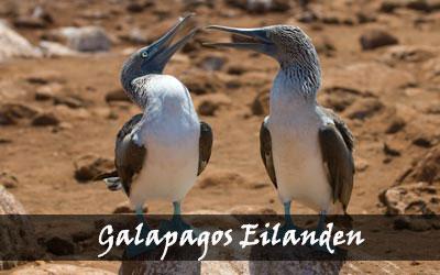 Backpacken Zuid-Amerika - Galapagos eilanden - Ecuador