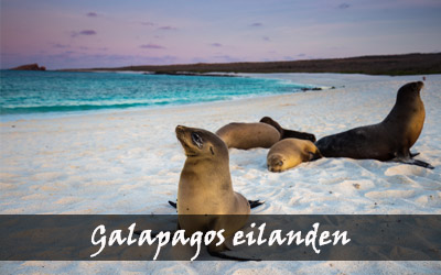 Backpacken Zuid-Amerika - Galapagos eilanden