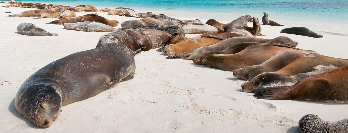 Espanola eiland op de Galapagos eilanden met zeeleeuwen die slapen op het strand