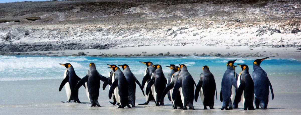 Backpacken Falklandeilanden in het prachtige continent, Zuid-Amerika