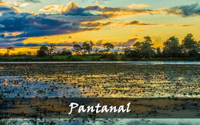 Backpacken Zuid-Amerika - Pantanal - Brazilië